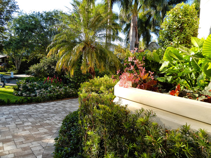Plant Care Miami Florida