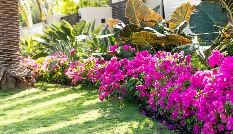 Miami landscaping Ideas